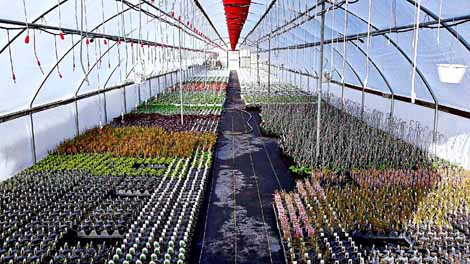 Sunnyview wholesale greenhouse