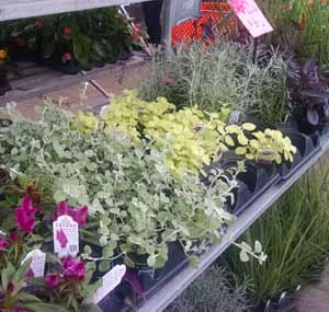 High quality wholesale and contract-grown plants